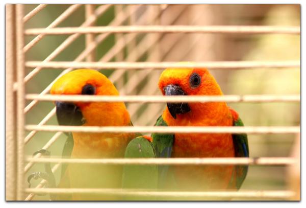 Tehran Birds Garden 02