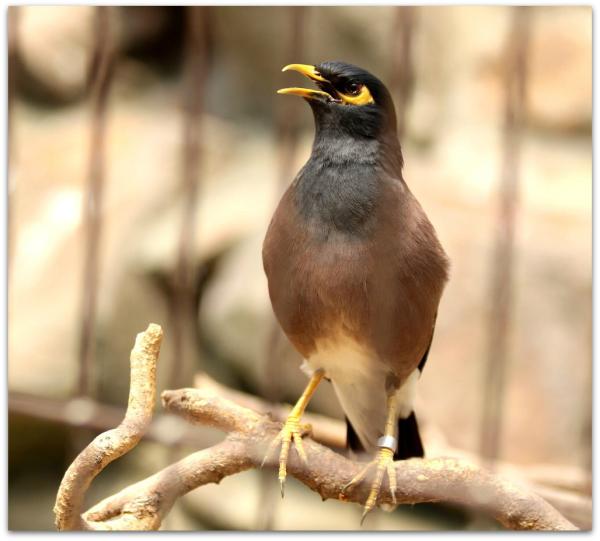 Tehran Birds Garden 01