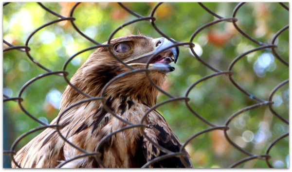 Eram Zoo 01