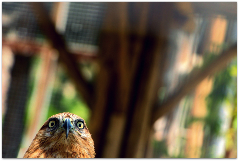 Tehran Birds Garden 16