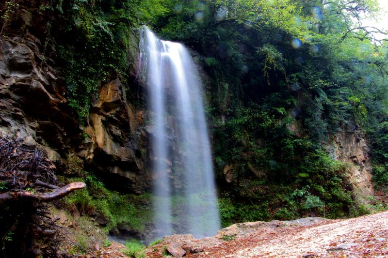 Lafour Jungle 02