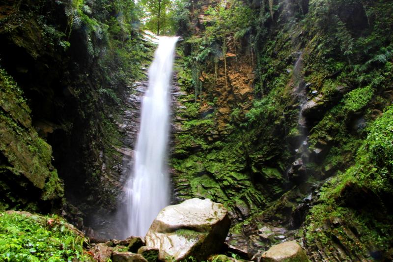 Lafour Jungle 04