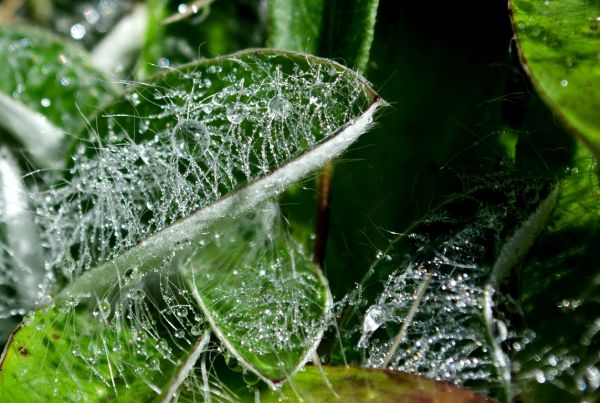 ... morning dew ...