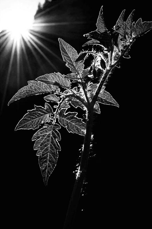 ... play of light (I) ...