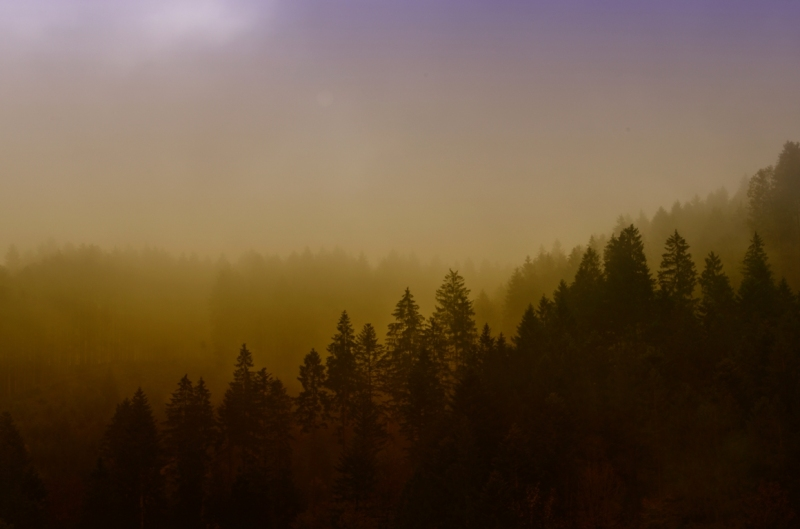 ... misty morning ...