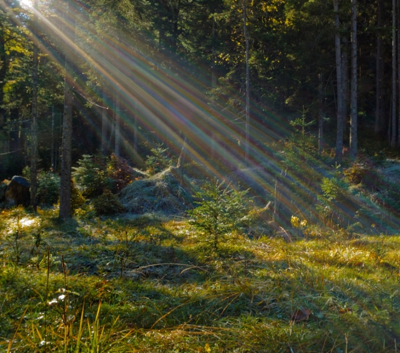 ... the first rays of the sun ...