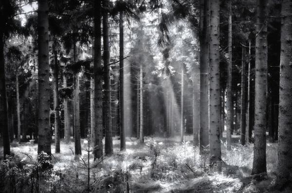 ... captivating light ...