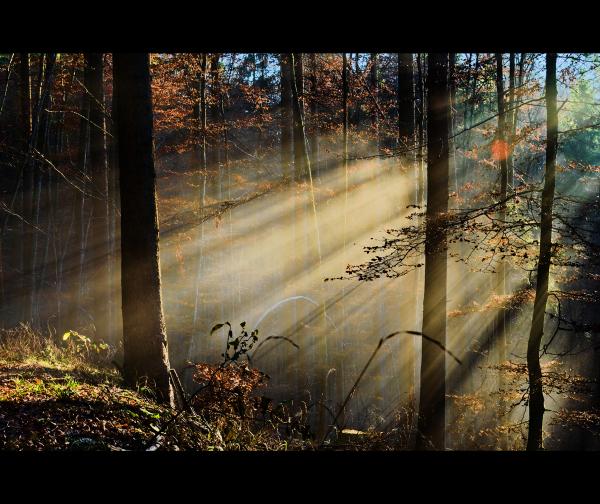... sun rays ...
