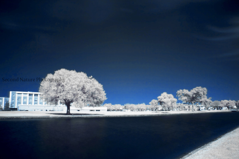 This is my best infrared photo to date