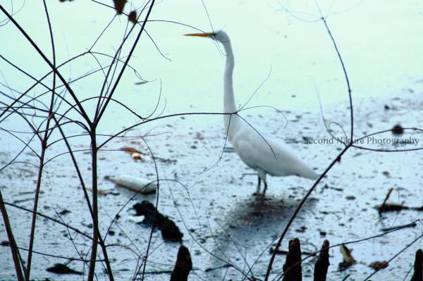 Egret I found in Audubon Park in New Orleans