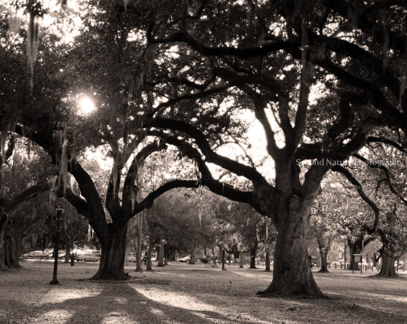 This is in Audubon Park, New Orleans.