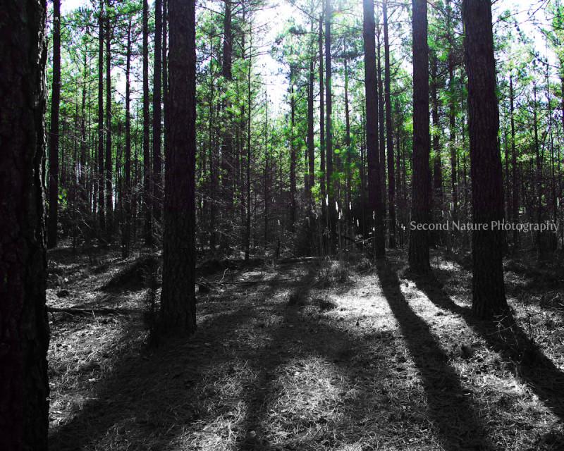 This was taken in  Schenk Forest, Raleigh, NC.