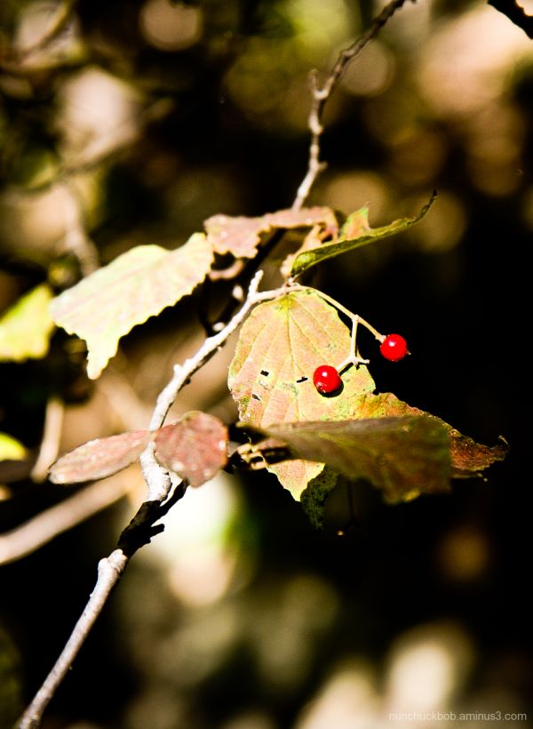 leaves red dots