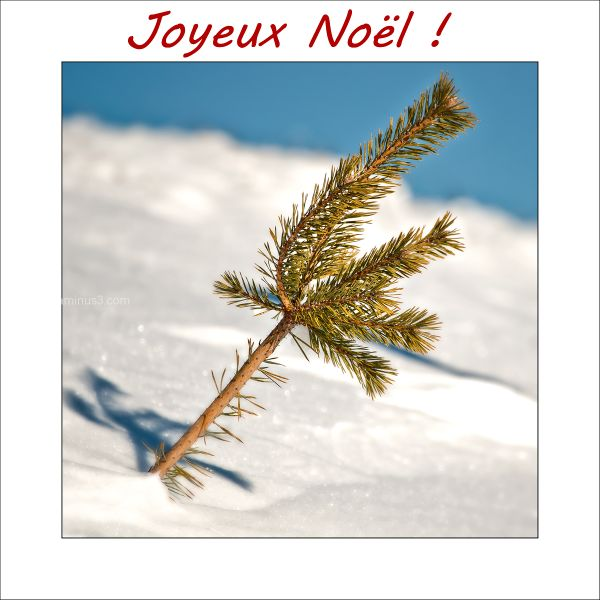 Merry Christmas pinetree snow