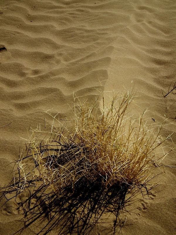 desert Boshroye
