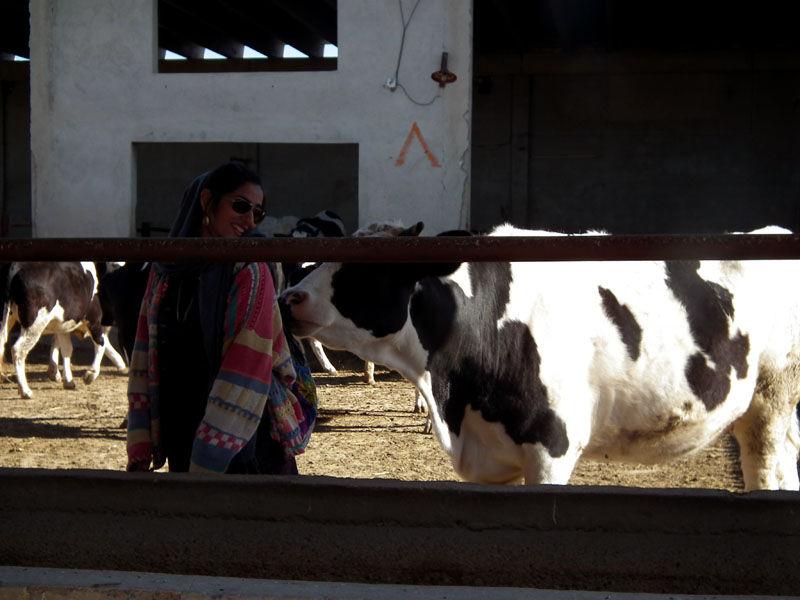 me & cow :)