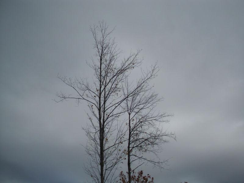 Fall, Apart