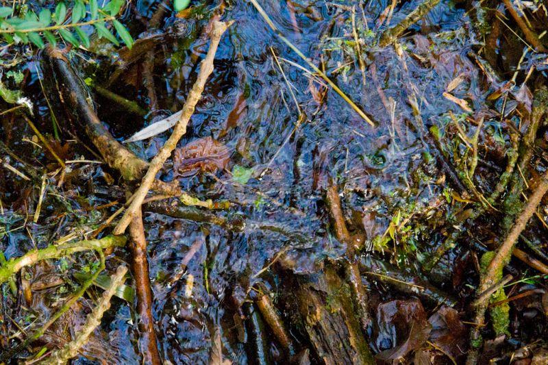 Branches formant barrage dans un petit cours d'eau