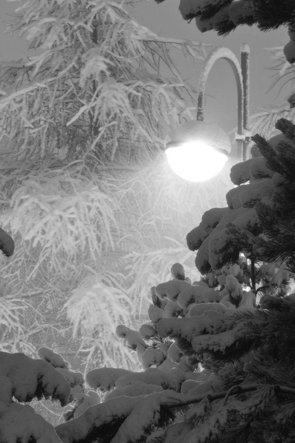 snow fall by night
