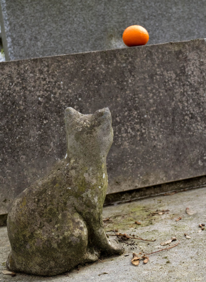 "Cat in ""Pere Lachaise"""