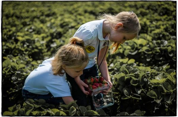 kids strawberries