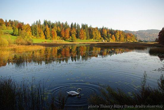 le lac du cygne