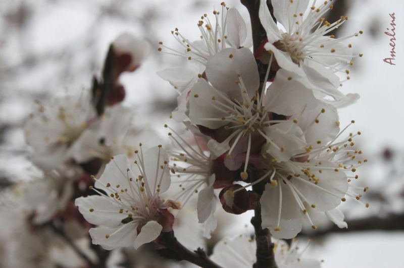 spring time2