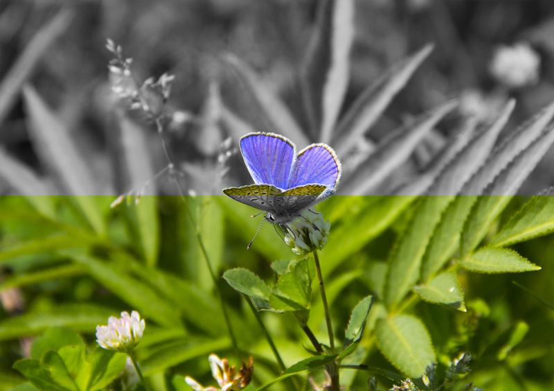 Feeling Butterflies
