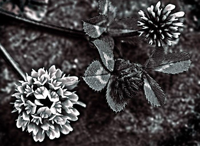 گلی بر روی سنگ
