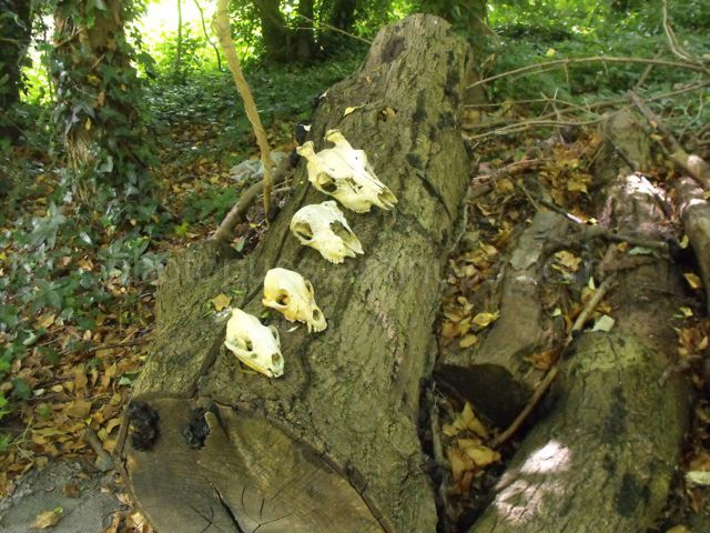 Skulls decorate a dead tree trunk