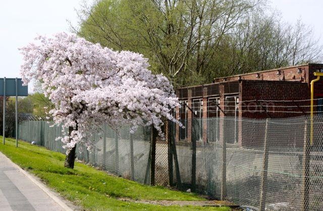 Industrial Tree