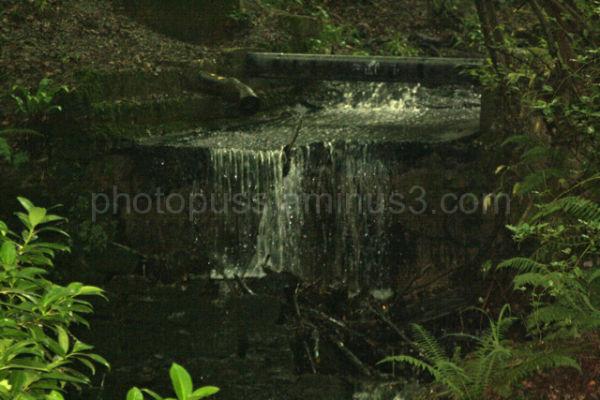 stream over ferns