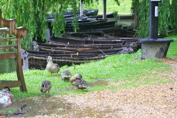 Ducks and Boats