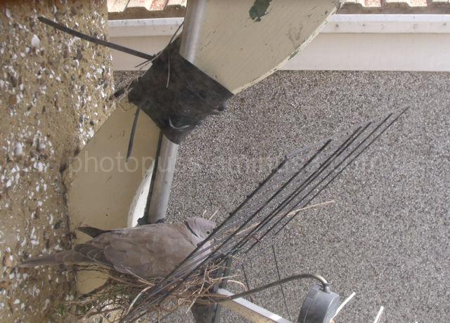 Dove on TV