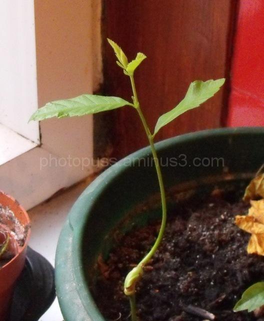 Seedling(3)