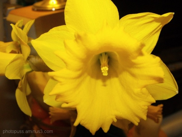 Lone Bloom