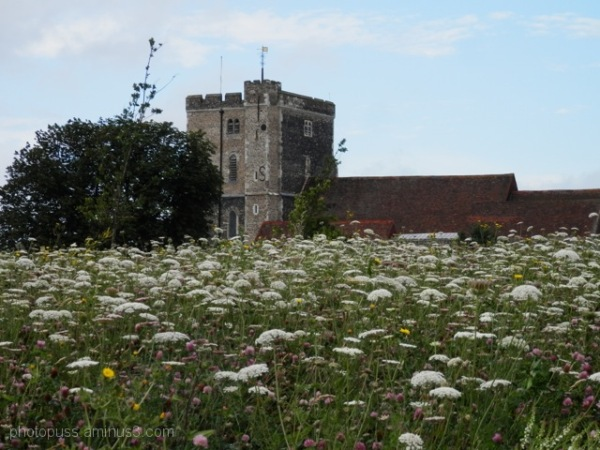Milton church and wildflowers