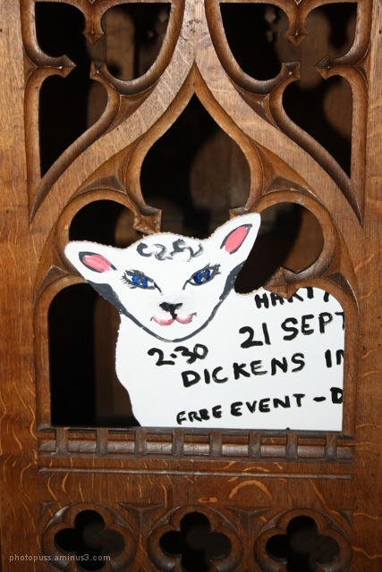 Sheep in pulpit