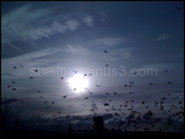 sky birds mood affect