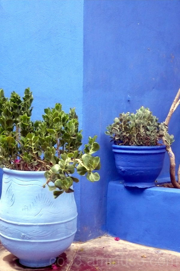 Maroc / Bleu Majorelle (3/3)