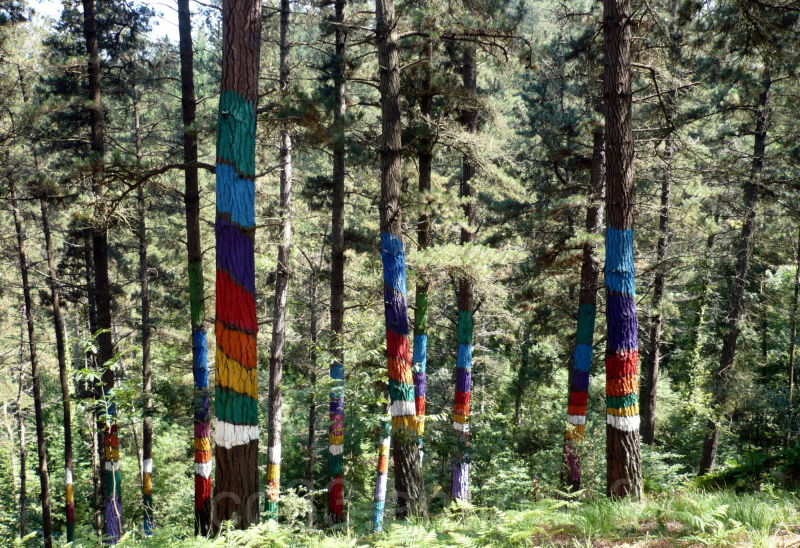 La forêt de pins d'Augustin Ibbarola
