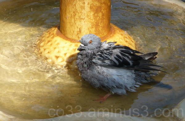 Le bain