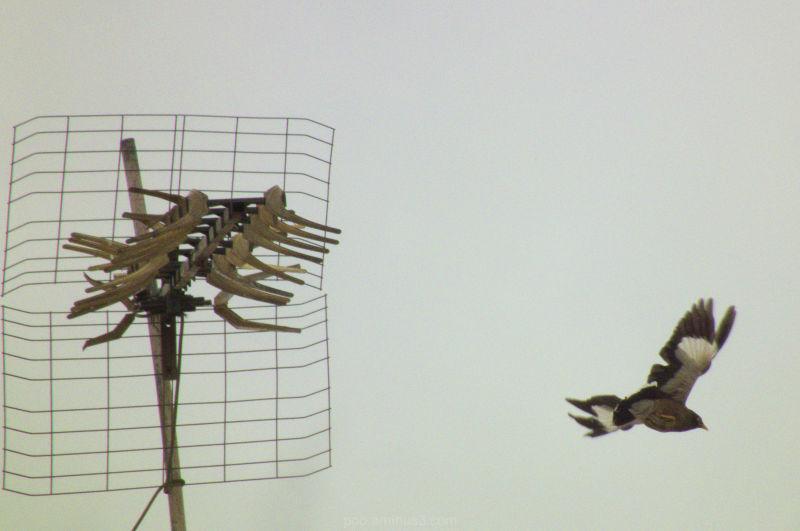 mina & antenna