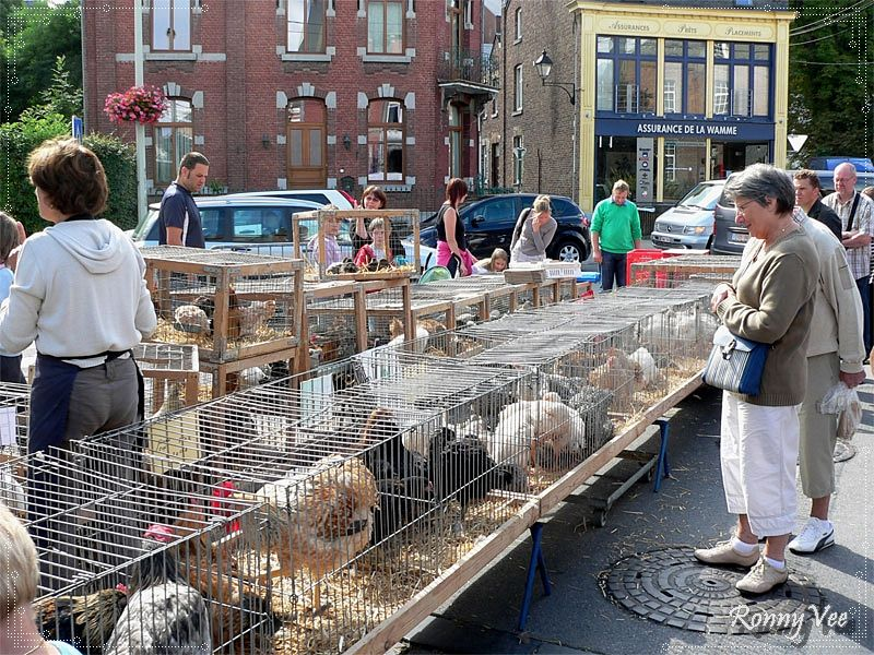 Small Animals Market.