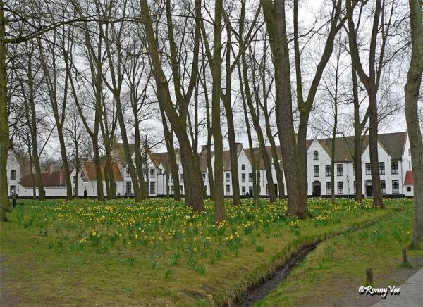 Het Begijnhof in Brugge met de Narcissen.