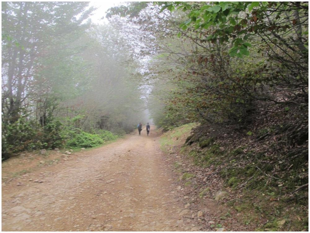 silvan path