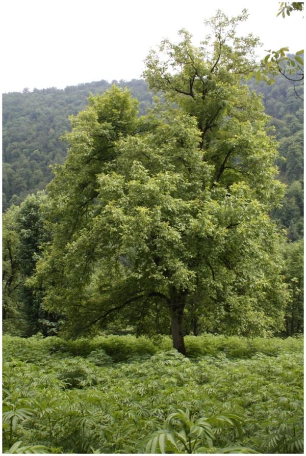 an alone tree