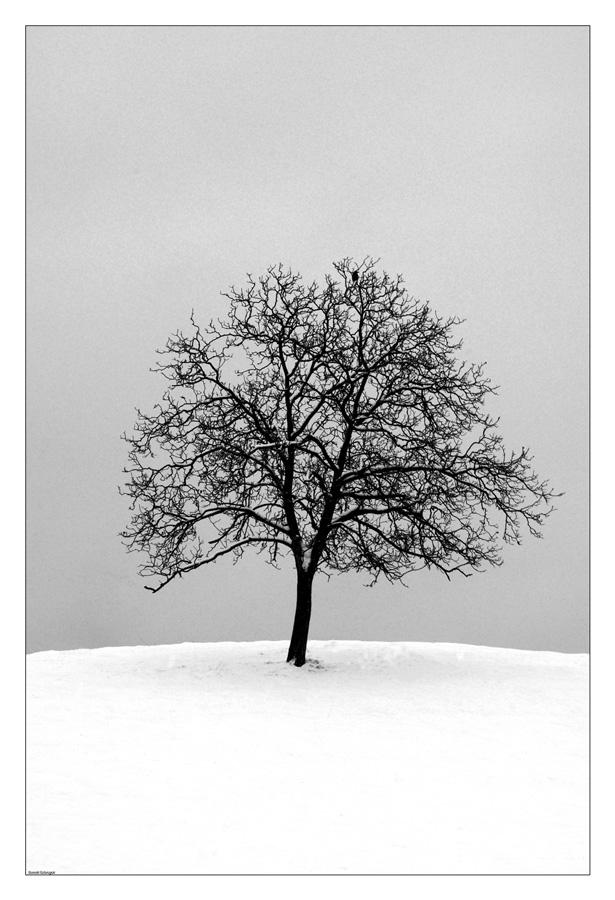 Un arbre isolé au milieu d'un champ blanc de neige