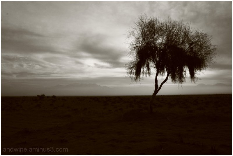 Gasping Sky, Wise Tree