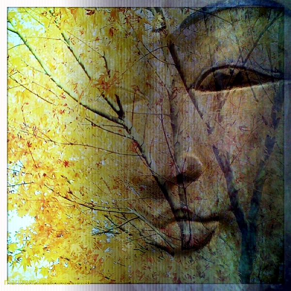 Bali, buddha,mix photo,photo collage, maple tree
